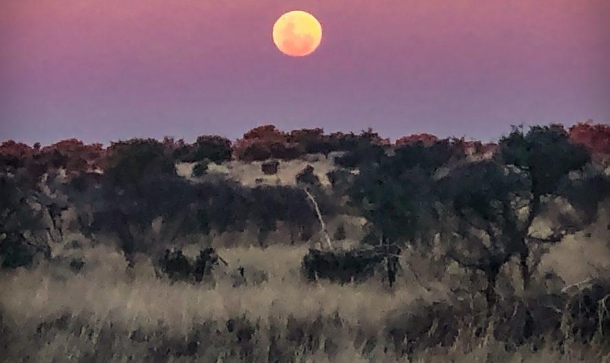 Central Kalahari Game Reserve – Xade Camp