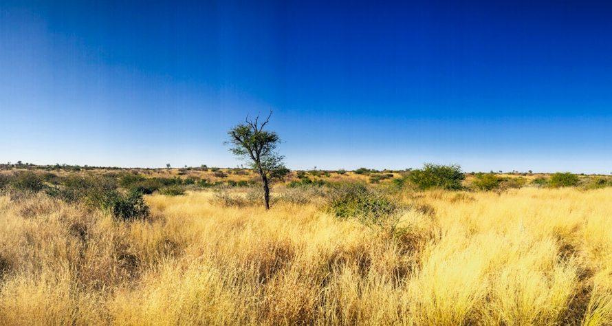 Central Kalahari Game Reserve – Deception Camp