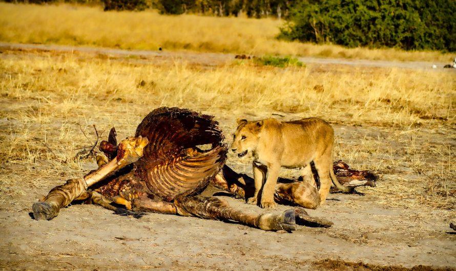 Nordwärts: Chobe Nationalpark