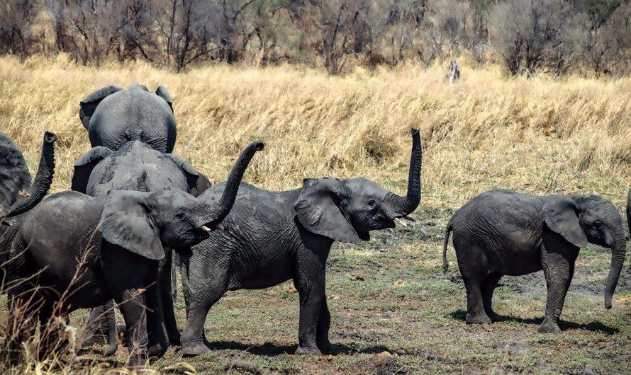 Khaudum Nationalpark